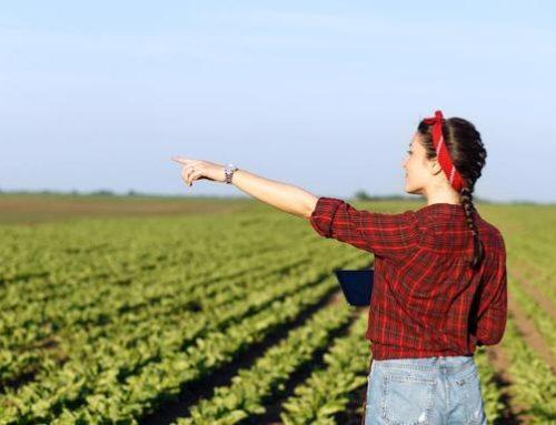 Ayudas al emprendimiento rural femenino